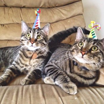 Birthday kitties!